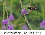snowcap  flying next to violet...   Shutterstock . vector #1270511944
