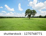 a solitary tree in the middle... | Shutterstock . vector #1270768771