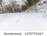 a path in the middle of woods... | Shutterstock . vector #1270776367