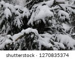 snow covered pine tree | Shutterstock . vector #1270835374