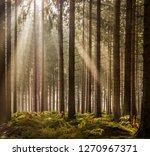 sunbeams in the eifel forest...   Shutterstock . vector #1270967371