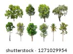 collection of isolated trees on ... | Shutterstock . vector #1271029954