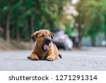 a cute roadside  brown puppy ...   Shutterstock . vector #1271291314