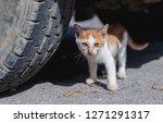 close up stray skinny orange...   Shutterstock . vector #1271291317