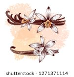 set of vanilla spice. ink drawn ... | Shutterstock .eps vector #1271371114