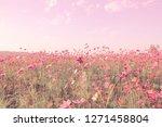soft blur of cosmos flowers... | Shutterstock . vector #1271458804