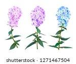 beautiful spring phlox flower....   Shutterstock .eps vector #1271467504