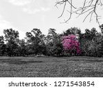 the tree full of pink flowers. | Shutterstock . vector #1271543854