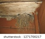 The Nest Of A Swallow Close Up...