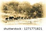 quintessential africa   an... | Shutterstock . vector #1271771821