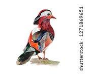 duck watercolor painting  print ... | Shutterstock . vector #1271869651