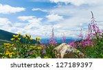 Flowers Blooming In A Colorado...