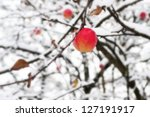 Red Apple On A Branch In The...