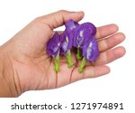 beautiful flower  hand holding... | Shutterstock . vector #1271974891
