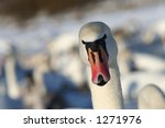 looking | Shutterstock . vector #1271976