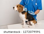 cropped view of veterinarian in ... | Shutterstock . vector #1272079591