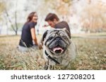 Stock photo pug dog walk in the park and look to camera 127208201