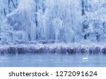 swan on the frozen lake a... | Shutterstock . vector #1272091624