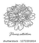 peony flower hand drawn in... | Shutterstock .eps vector #1272201814