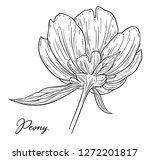 peony flower hand drawn in... | Shutterstock .eps vector #1272201817