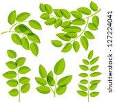 set of various leaves design...   Shutterstock .eps vector #127224041