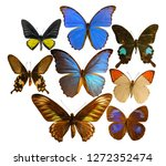 beautiful butterfly isolated on ... | Shutterstock . vector #1272352474