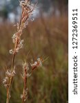 wild flowers closeup with water ... | Shutterstock . vector #1272369511
