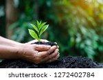 in the hands of trees growing... | Shutterstock . vector #1272402784