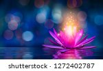 Lotus Pink Light Purple...