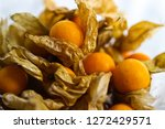 group of cape gooseberry  phys... | Shutterstock . vector #1272429571