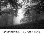 gloomy rainy weather landscape... | Shutterstock . vector #1272544141
