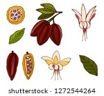 cacao beans  cacao tree leafs  ... | Shutterstock .eps vector #1272544264