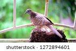 bird build their nest and hatch ... | Shutterstock . vector #1272894601