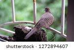 bird build their nest and hatch ... | Shutterstock . vector #1272894607