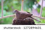 bird build their nest and hatch ... | Shutterstock . vector #1272894631