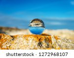 upside down seascape with blue ... | Shutterstock . vector #1272968107