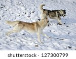 two husky dogs running in the... | Shutterstock . vector #127300799