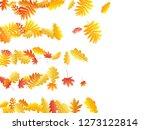 oak  maple  wild ash rowan... | Shutterstock .eps vector #1273122814