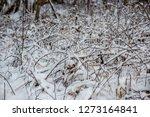 sunny winter day in snowy... | Shutterstock . vector #1273164841