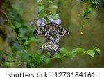 Butterfly Park In Bohol...