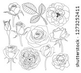 Stock vector vector set of isolated roses outlines hand drawn flower illustrations on white background floral 1273252411