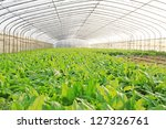 vegetable greenhouse interior... | Shutterstock . vector #127326761