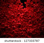 Stock photo rose petals background on black ground 127333787