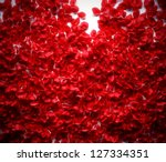Stock photo rose petals background on white ground 127334351