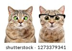Stock photo portrait of two cute cats with eye diseases isolated on white background 1273379341