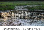 reflection of a forest at...   Shutterstock . vector #1273417471