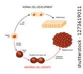 cancer cell and normal cell.... | Shutterstock .eps vector #1273619011