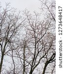 Small photo of Intertwining leafless branches of several trees in winter set against featureless plain sky background in vertical image format.