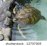 sea turtle - stock photo