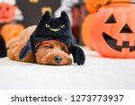 dog enjoying halloween party | Shutterstock . vector #1273773937